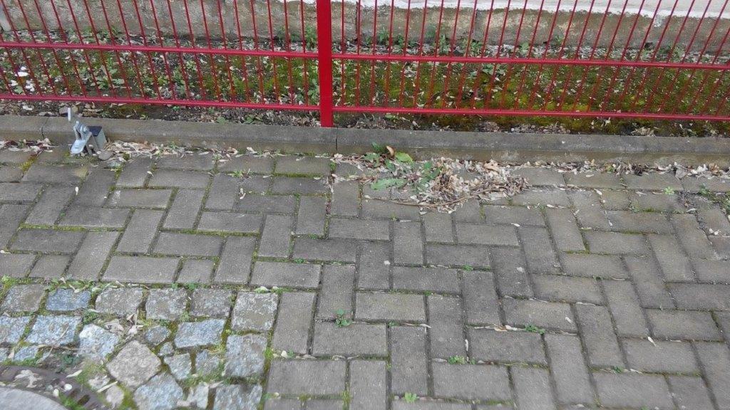 Löwenzahn-Gebesee-18-03-20
